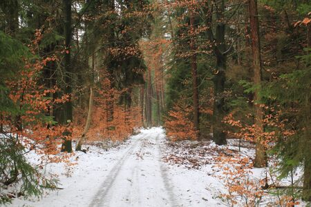beautiful forest near to Schwandorf in bavaria in winter photo