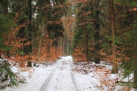 beautiful forest near to Schwandorf in bavaria in winter Stock Photo - 12427703