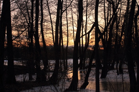 beautiful sunset between trees near to a river photo
