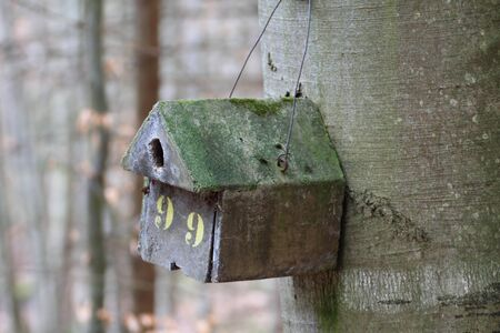 An old birdhouse on a big tree photo