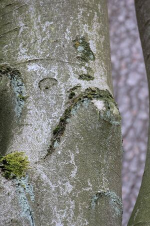 bole: the bole of a tree looks like a face