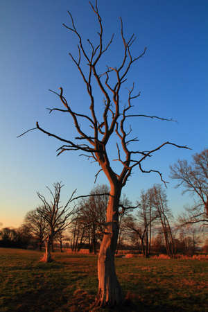 tree in spring with blue sky behind Stock Photo - 12899984