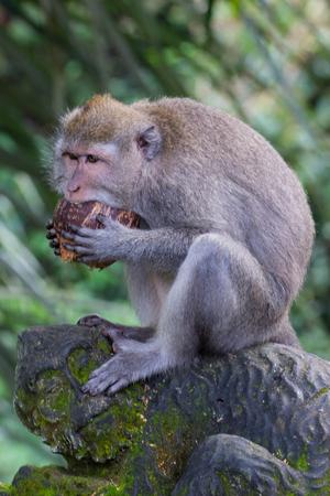 Sacred Monkey Forest, Ubud on Bali, Indonesia