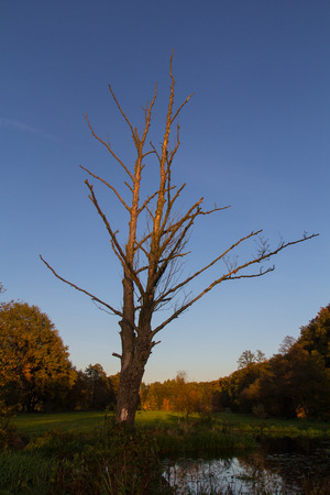 A big tree without leaves next to Schwandorf in Bavaria in autumn photo