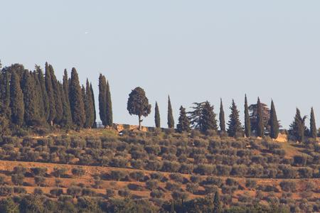 The vineyards in bardolino at the lake garda in italy Stok Fotoğraf