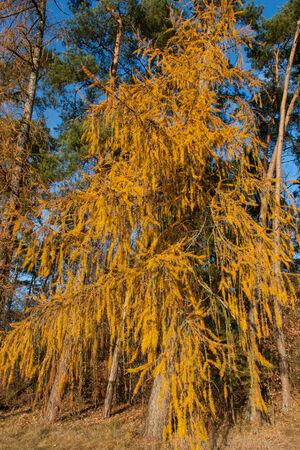an orange tree in autumn photo