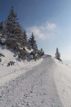 hoar frost: trees in a beautiful winter landscape