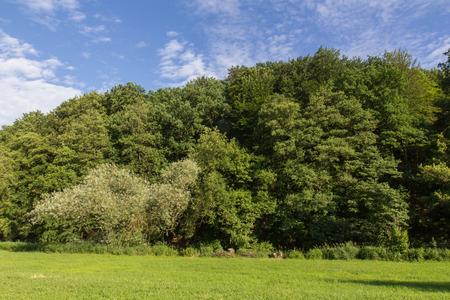 campo de flores: Paisaje de primavera con los �rboles en un d�a soleado en verano.