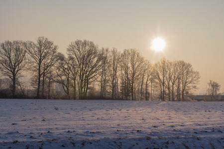 beautiful winter sunset with birds and trees next to Schwandorf in Bavaria