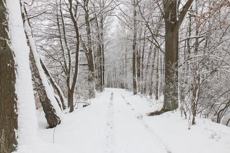 bavarian winter landscape next next to schwandorf, Charlottenhofer Weihergebiet Banco de Imagens