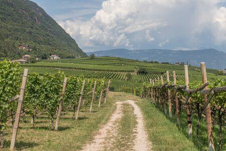 Vineyards around Kaltern in South Tyrol in Italy