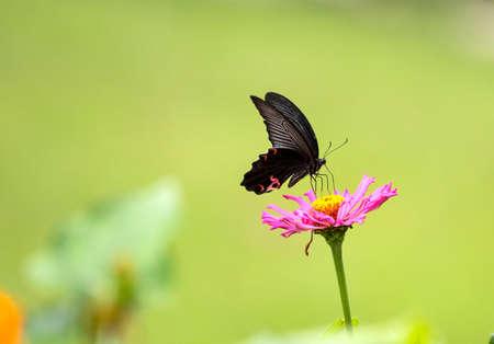 constitute: Beautiful butterflies Stock Photo
