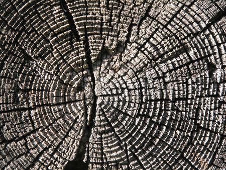 古い木のテクスチャをクローズ アップ