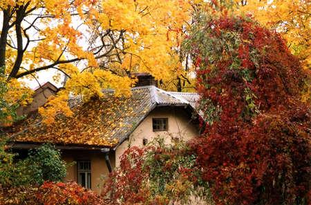 黄色で覆われた小さなコテージと赤の葉、秋の色