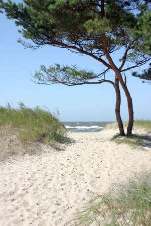 松の木と海の水を介して地平線ビーチへのサンディのパス