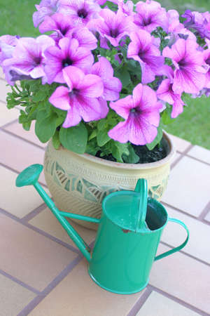 Flower pot with petunias and green color watering can Stock Photo