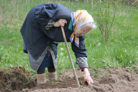 Humpback 80-90 years old woman working at her garden, real situation picture