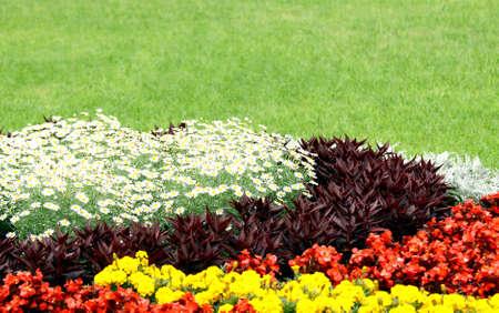 公共空間の緑の草を背景に美しい花壇 写真素材