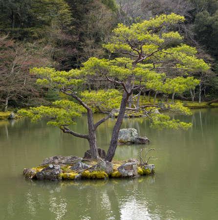 日本の京都で日本庭園で松の木の小さなロック島
