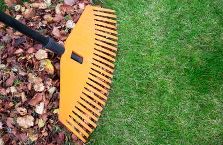 Fall leaves with rake on green lawn. Plenty of copy space 版權商用圖片 - 32152200