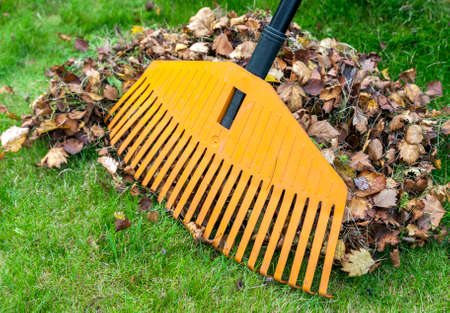 Pile of fall leaves with rake on green lawn