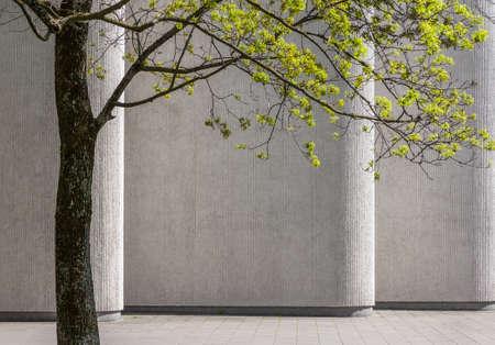 コンクリートの建物の壁の背景に春の緑の木