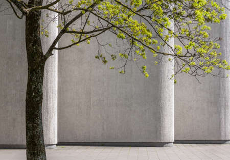 Groene boom in de lente tegen de achtergrond van betonnen bouwmuur Stockfoto