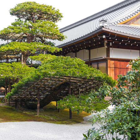 Traditional landscaped japanese garden detail with old green pine tree and wooden architecture building