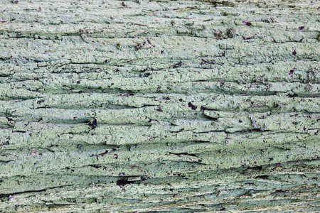 Natural old wood background, mossy wooden bark texture, weathered nature pattern