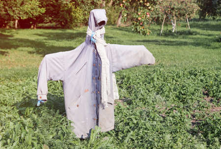 Garden scarecrow made of old clothing standing in the field at summer, outdoor farm picture