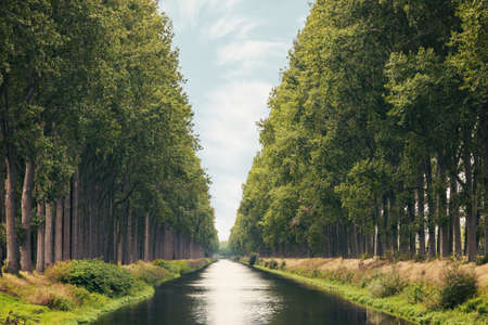 The Damme Canal surrounded by trees in summer in the Belgian province of West Flanders near the city of Brugge 写真素材