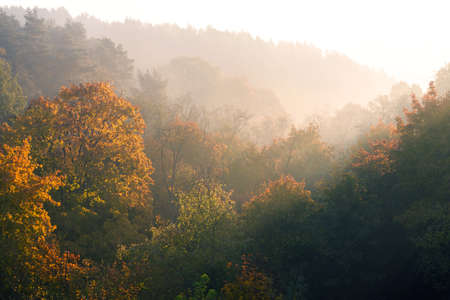 Autumn forest landscape early in the morning, golden colored nature background 免版税图像