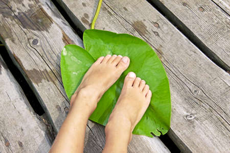 Barefoot child feet relaxing on big green lily leaf, top view closeup outdoor picture