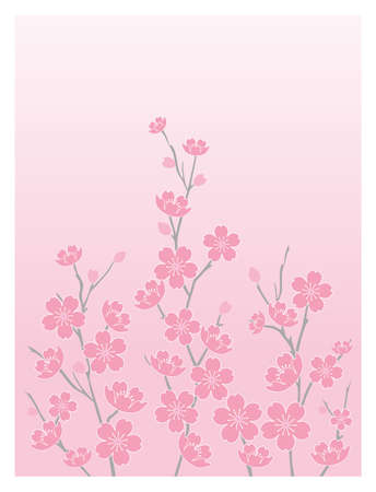Cherry Blossoms - Vertical with Graduated Background