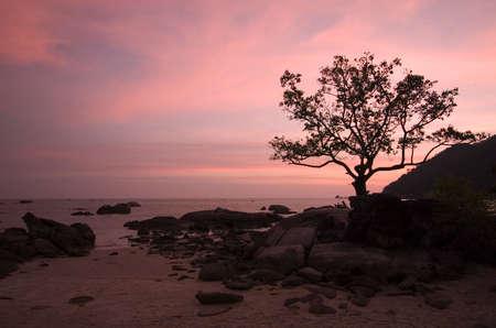 vacancier: Coucher du soleil par la plage, �le de Langkawi, Malaisie. Les d�tails incluent un couple se reposant intimement ensemble sous larbre par les rochers.