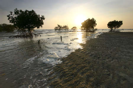mangrove: Mangroves, Malaysia - The tide making its way in towards a mangrove forest by the coast in the late afternoon.