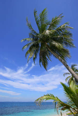 tropical paradise: Tropical Paradise - Palm trees by the beach on a beautiful sunny day