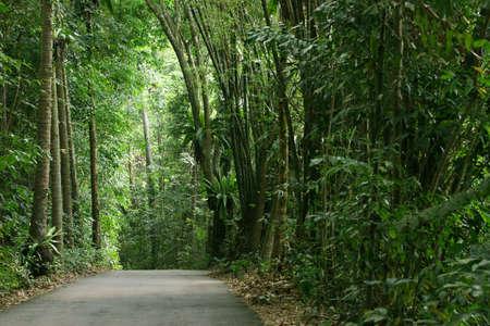 Tropical rainforest in Pulau Ubin (Granite Island), Singapore photo
