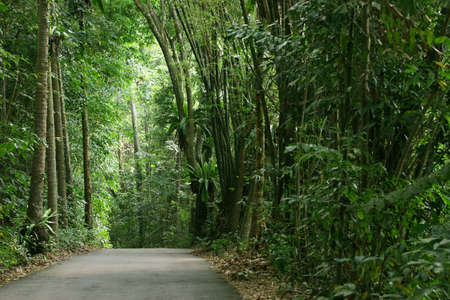 Tropical rainforest in Pulau Ubin (Granite Island), Singapore