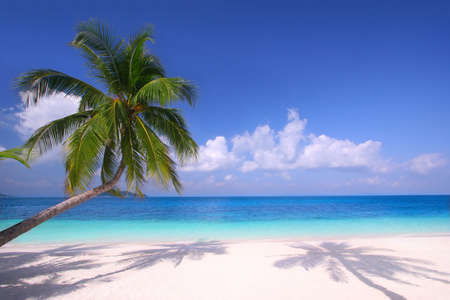 beach palm: Island Paradise - Pristine beaches, palm trees and clear blue water