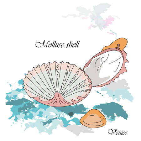 Adriatic shells used in kitchen of Venice on the blue background. Vector illustration. Illustration