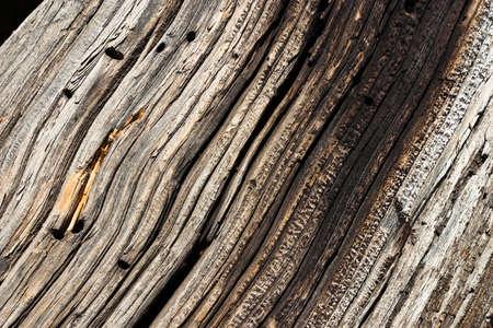Closeup of Old Log photo