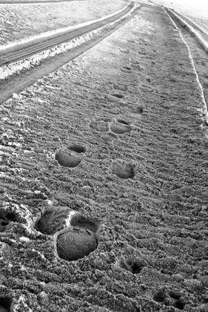 traces pneus: Des s�ries parall�les de traces de pneus et d'empreintes de pas dans le sable Banque d'images