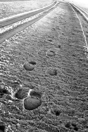 tire tracks: Parallel Sets of Tire Tracks and Footprints in Sand Stock Photo