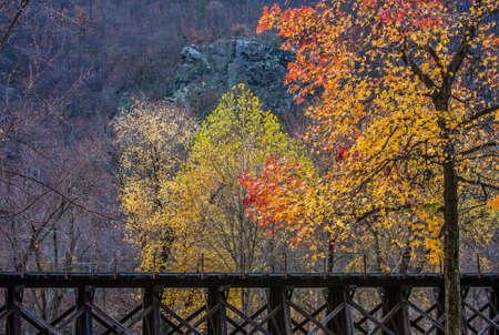 west virginia trees: Train Trestle in Autumn