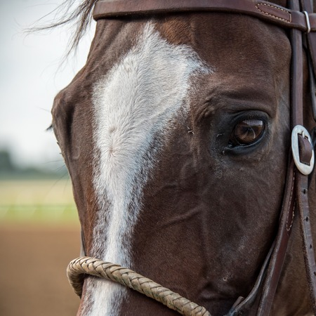 Closeup of a Horse at the Track with Reflection in Eye