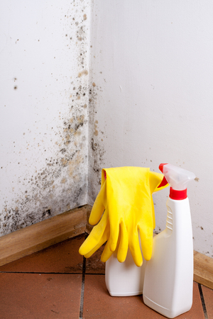 Black mold in the corner of room wall. Preparation for mold removal. 版權商用圖片