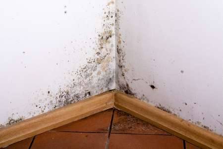 Black mold in the corner of room wall 免版税图像 - 50615353