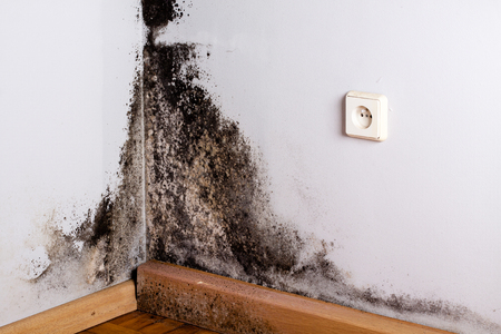black mold: Black mold in the corner of room wall