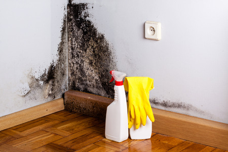 Black mold in the corner of room wall. Preparation for mold removal. Standard-Bild
